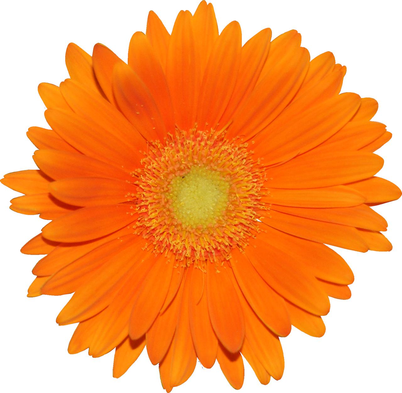 Раскраска цветик семицветик Распечатать картинки
