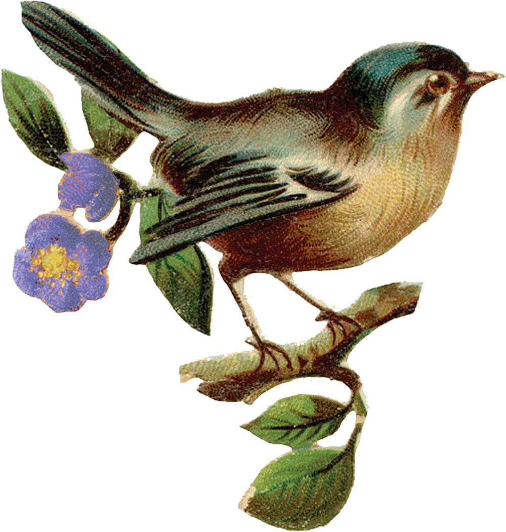 Рисунки сова для вышивки