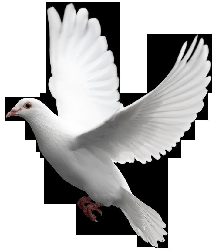 Фото птичка воробей
