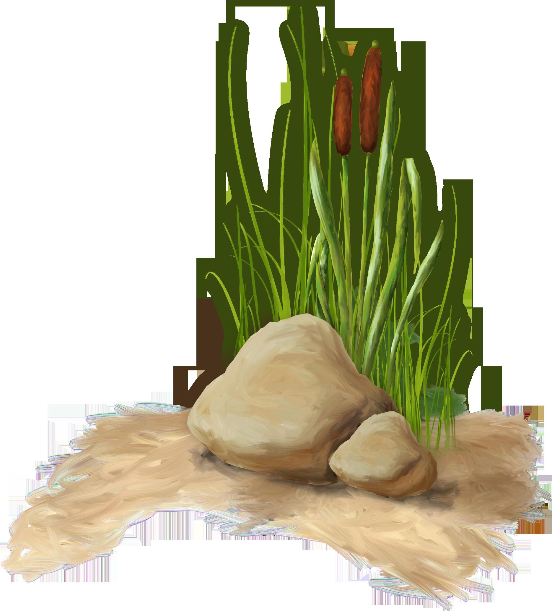 Обои цветок нимфея водяная лилия в крапинку лепестки
