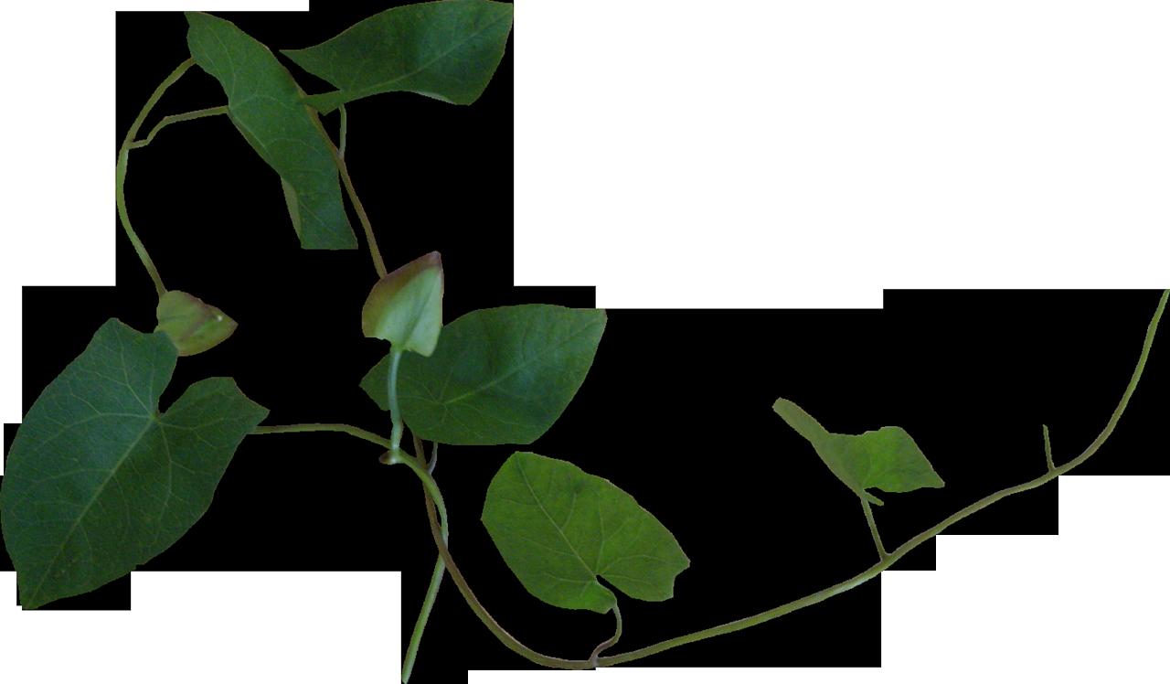 Красивый листик