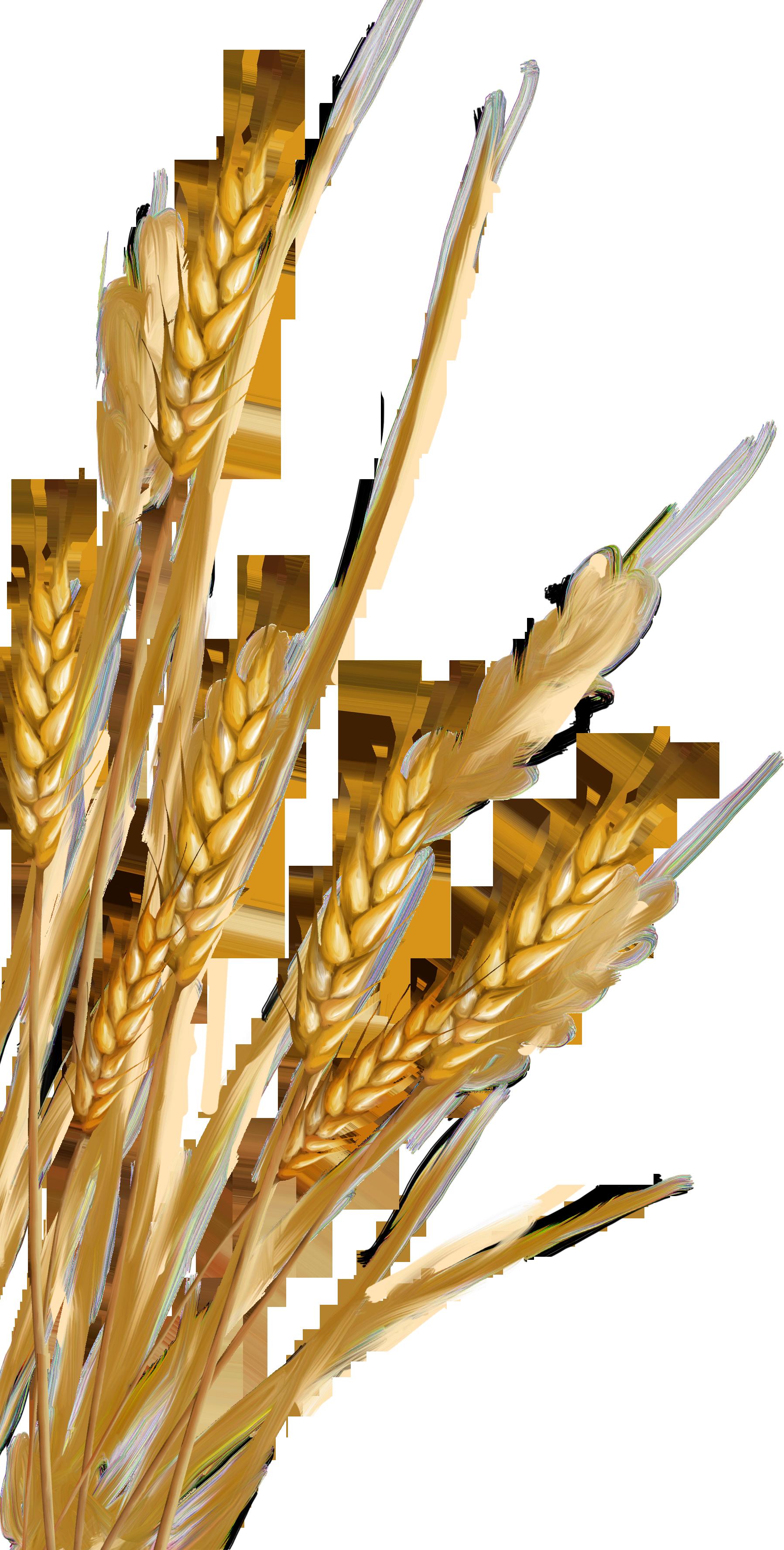 Рисунок пшеница и рожь