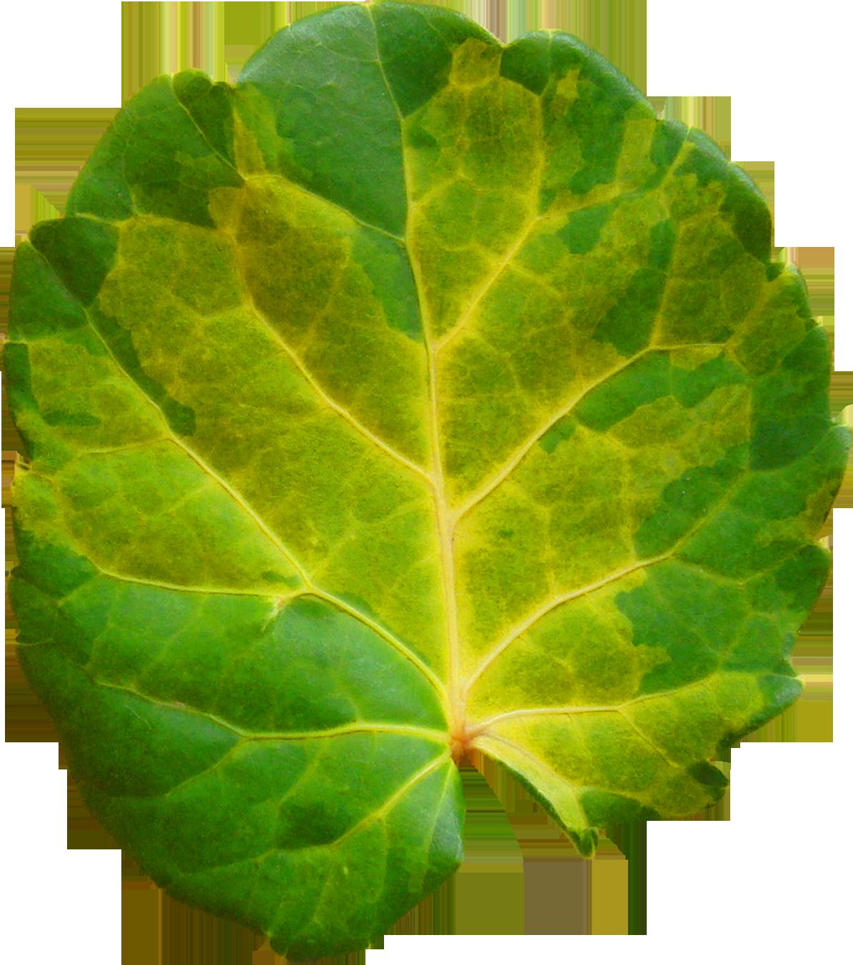 Нарисованный листопад