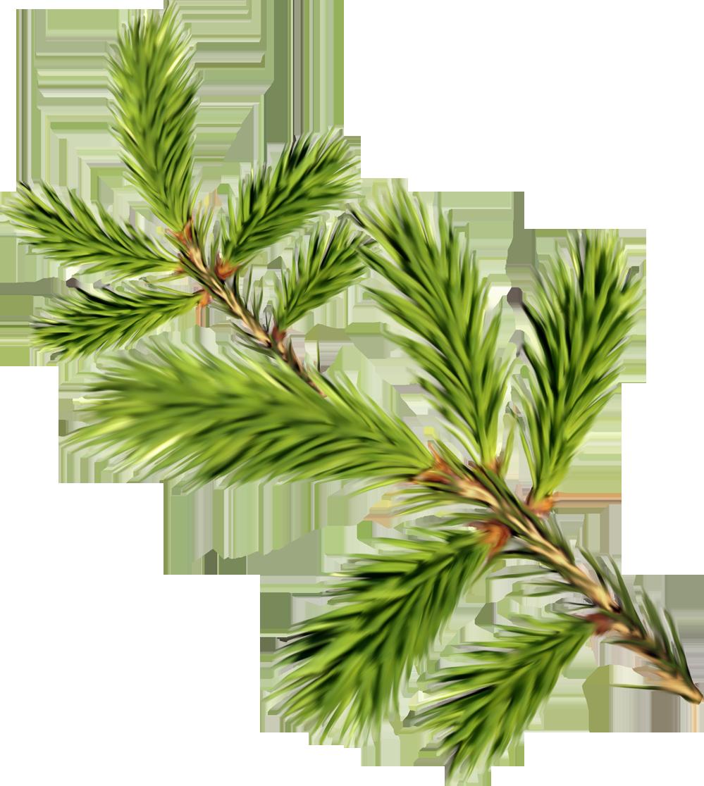 Кленовый лист зеленый картинка